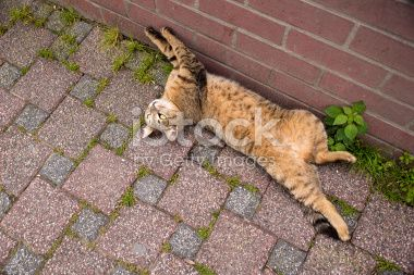 Playful cat lying on the ground Royalty Free Stock Photo