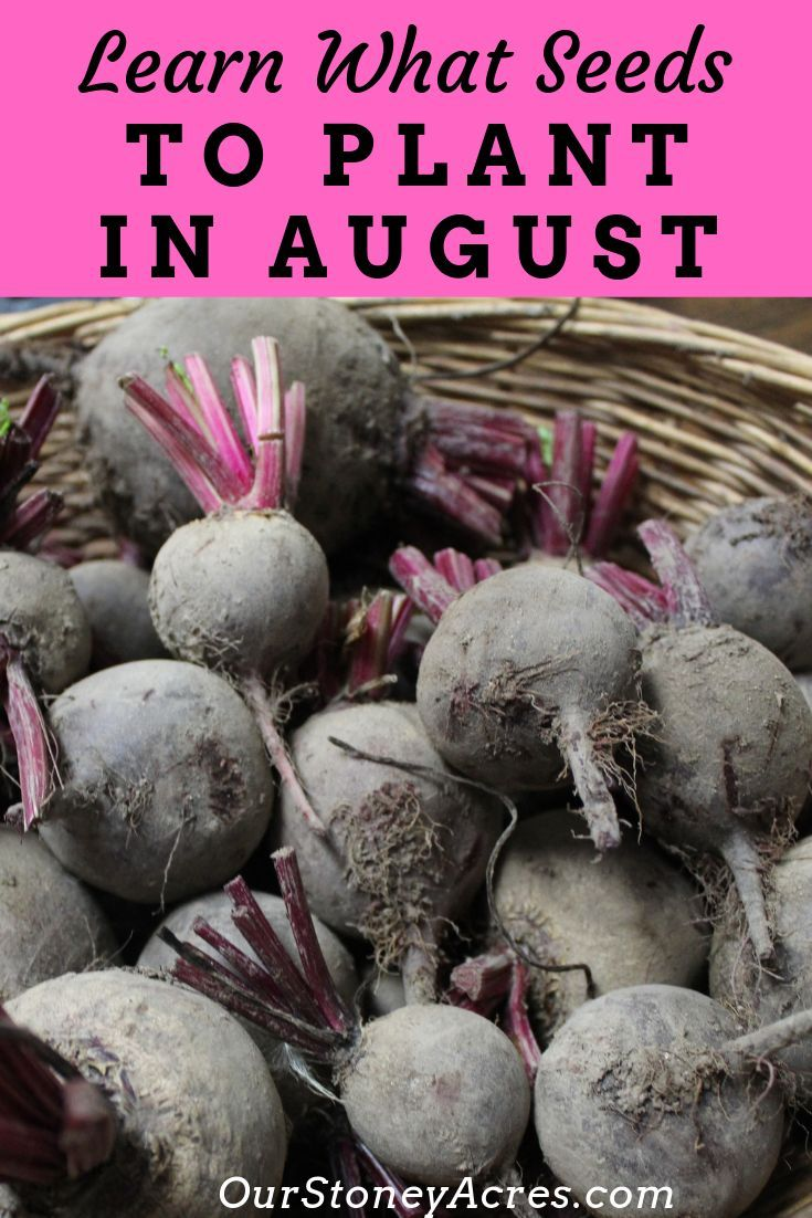 9 Crops You Can Plant In August For Fall And Winter Harvest Our Stoney Acres Fall Garden Vegetables Fall Vegetables Planting Vegetables
