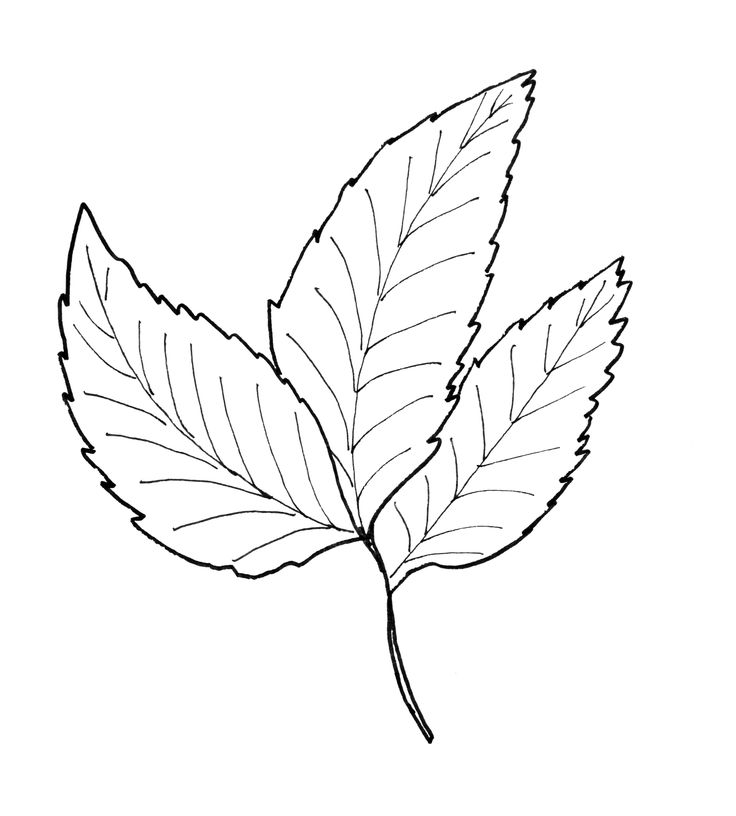 17 Best Ideas About Leaf Template