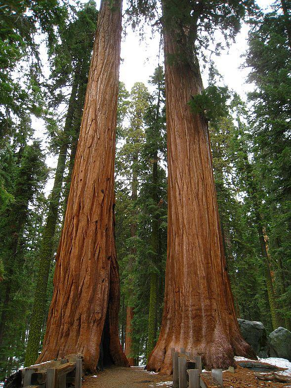 Национальный парк Секвойя, Калифорния, США.