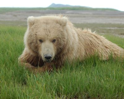 wildlife | Grizzly Bear Blog | Page 13
