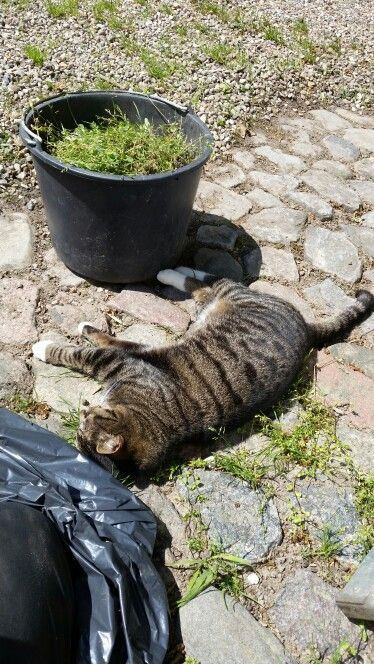 Tigré hjælper med havearbejde