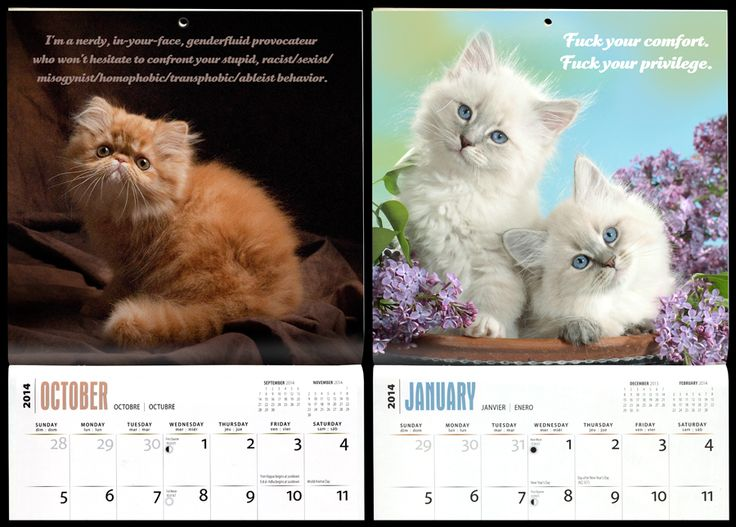 Social Justice Kittens 2014 Calendar.  Tee hee. How I wish this were a real thing.