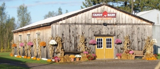 Snyder's Family Farm -- pumpkin patch and Family Fall Festival every weekend in the autumn