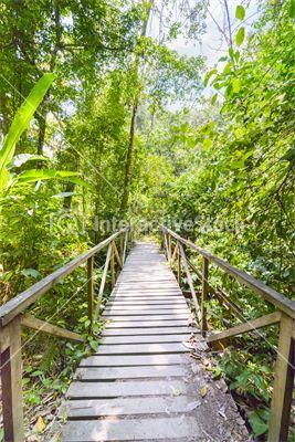 Welcome to the jungle #wood #bridge #green #kingdom #wildness #adventure #interactivestock