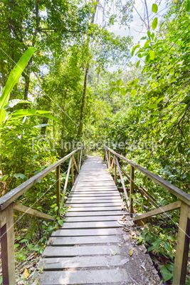 Welcome to the jungle #wood #bridge #green #kingdom #wildness #adventure #interactivestock