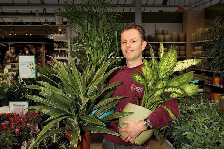 Kamerplanten - Producten - Tuincentrum Rebel in Huizen is de sfeermaker van 't Gooi met alles voor huis, tuin en dier!