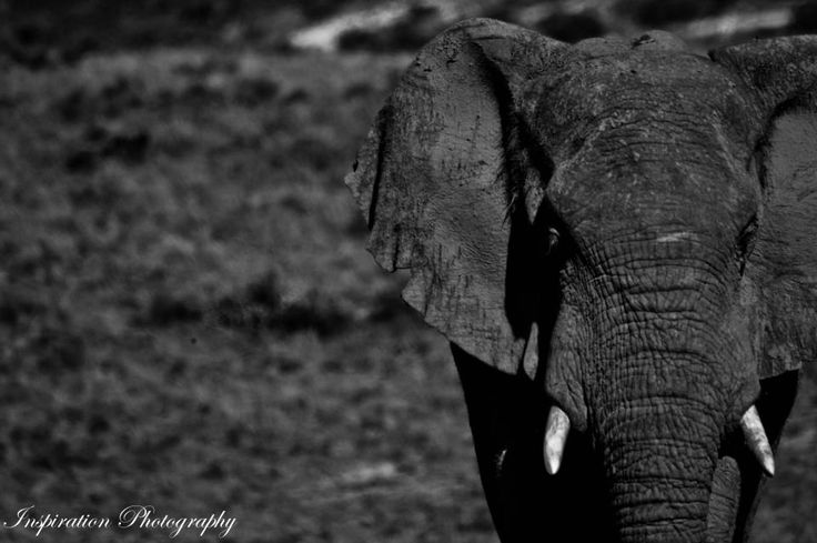 Photo Taken By Kyle Ansell on Amakhala Game Reserve