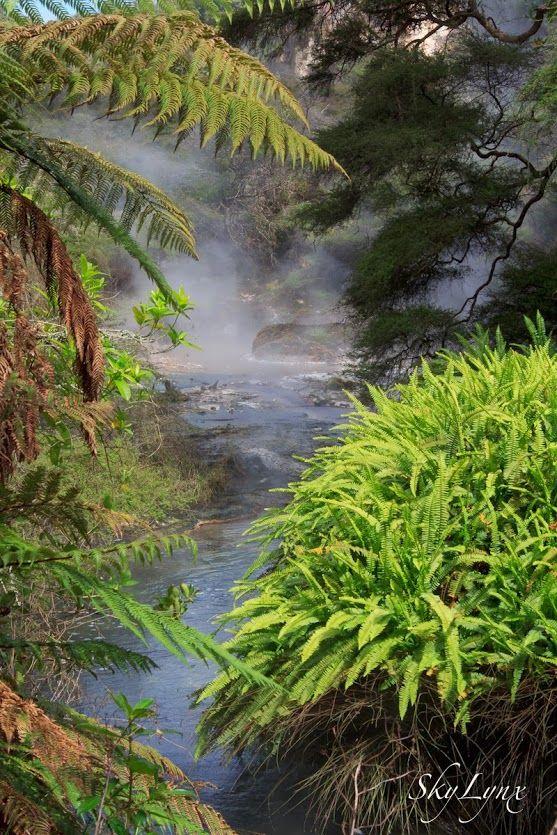 Thermal park, North Island. New Zealand landscape  #SkyLynx #landscape #New Zealand