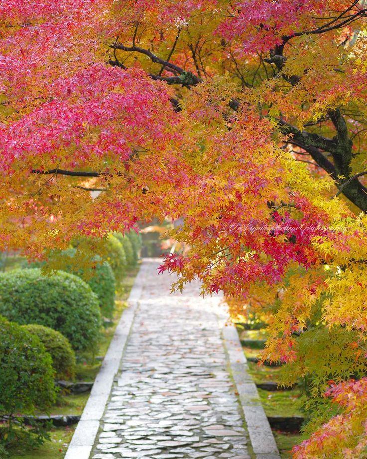 * * _________________________________________ Date : 2017.11.23 * Location : 一休寺 / Ikkyuji Temple 京都府 / Kyoto , Japan _________________________________________ 朝の一休寺🍁人も多くなく、紅葉のトンネルに感動しました😊ここで三脚立てて何枚撮るねんて思うくらい自撮りしまくる中国人おったけど😓 * 宮崎最終日!今夜関西に帰ります✈️ でもまたすぐ来なあかんかも😅 * * * * * #一休寺 #そうだ京都行こう #loves_united_kyoto * #はなまっぷ紅葉2017 #Lovers_Nippon_2017秋コン #Kani_Filter_2017秋コン #wp_紅葉2017 * #whim_fluffy #special_alive_ #myheartinshots #flower_igers #world_bestflower #bestflowerspics #LOVES_GARDEN…
