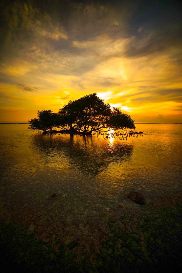 goldy and reflectio par Sanjaya Margianta on 500px