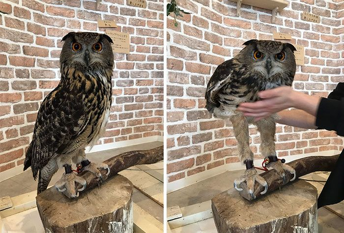 Who would have though that owls have so long legs? Animals | Bored Panda-- owls are 70% leg