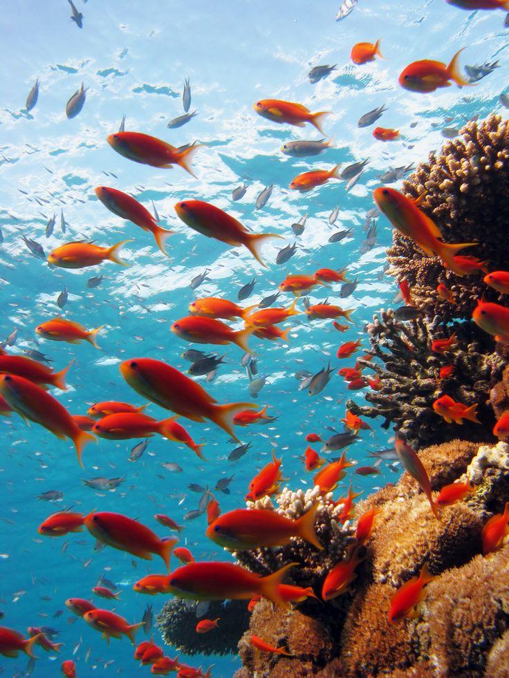 Basseterre, Chrishi Beach Club and Zenith Nevis development, Saint Kitts and Nevis  Photo details