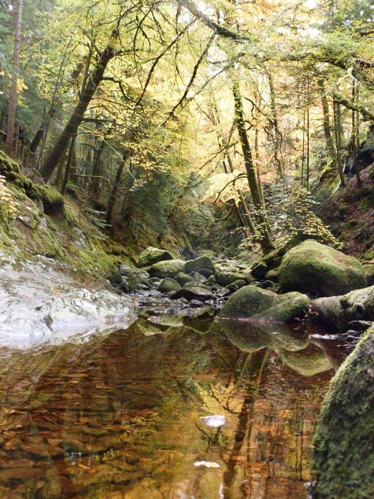 Where Fairies Live! Sutherland's Grove Barcaldine West Coast of Scotland. [3240 x 4320] http://ift.tt/2doi6I0 @tachyeonz
