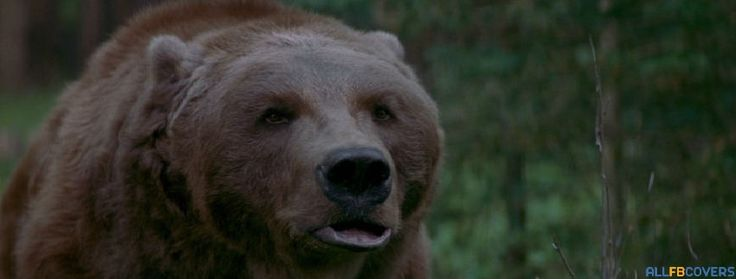 bart the bear ii