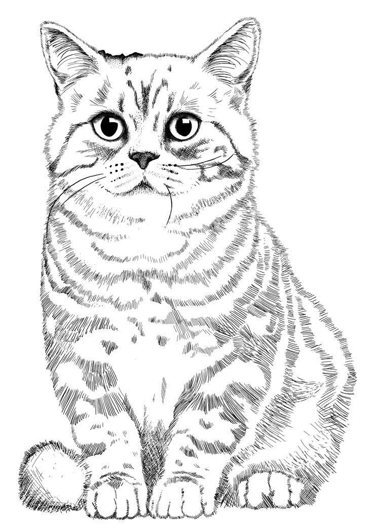 Line Drawing Kitten : Best church children s mural images on pinterest