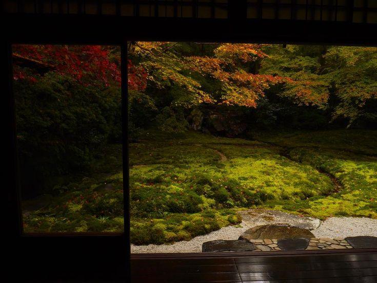 #紅葉 #紅葉狩り #秋 #自然 #京都 #寺 #autumn #nature #naturelovers #nature_perfection #temple 京都瑠璃光院撮影