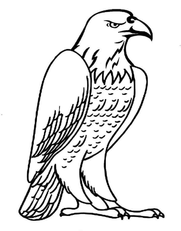 Printable Eagle Coloring Pages In 2020 Bird Coloring Pages