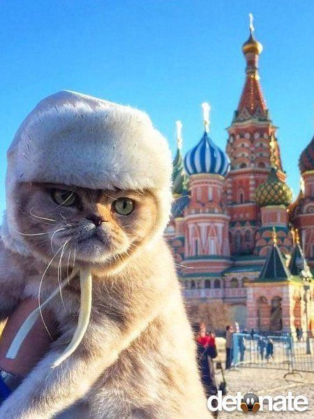 This cat had the feline that the hat was superfluous ie well what's my fur fur ? This location is St Basils cathedral / Basilica in the  Kremlin Russia
