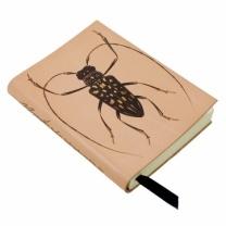 Stellognathe notebook - www.origin-of-style.com
