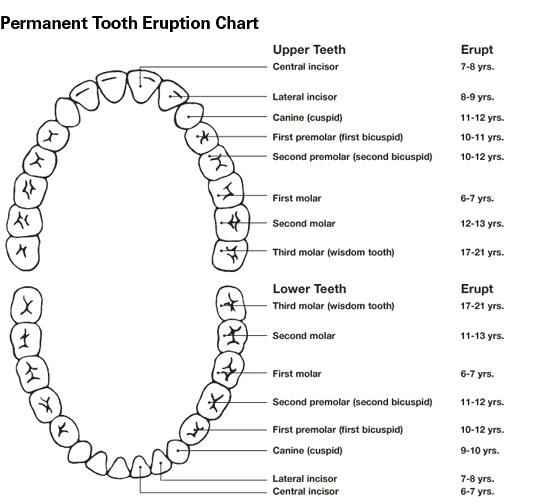 The 25+ best Teeth eruption chart ideas on Pinterest Baby - baby teeth chart