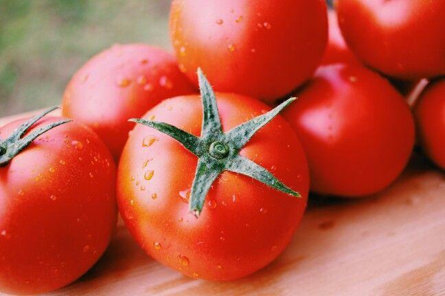 파파마토 토마토