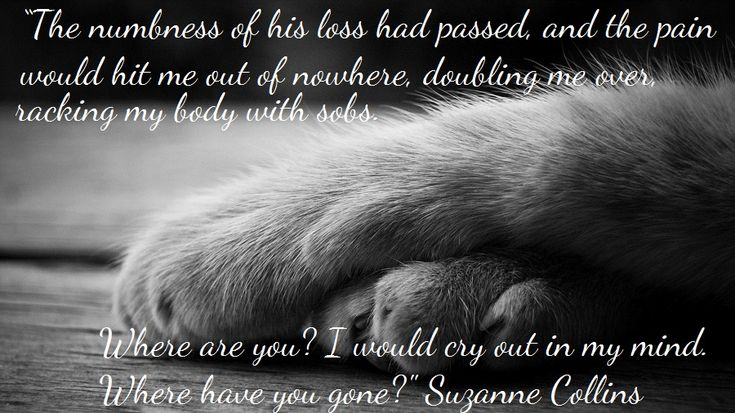 Grief Quotes Loss Pet