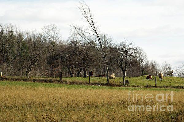 Farmyard Dreaming