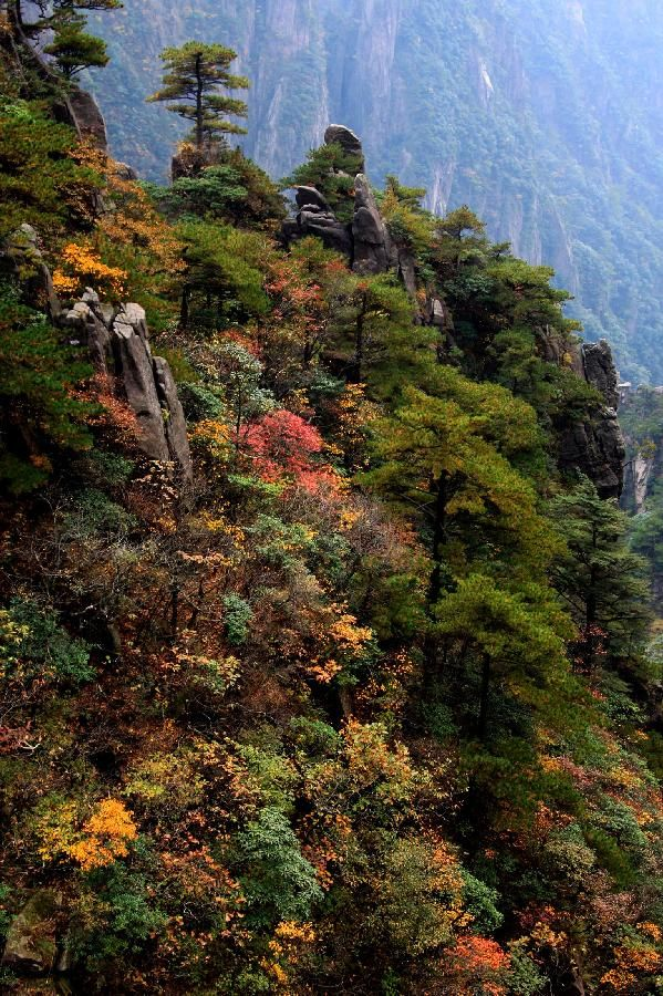 Photo taken on October 20, 2013 shows the autumn scenery of the Huangshan Mountain's in Huangshan, Anhui Province
