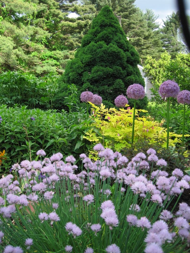 45 Best Images About Perennials- Minnesota Hardy On