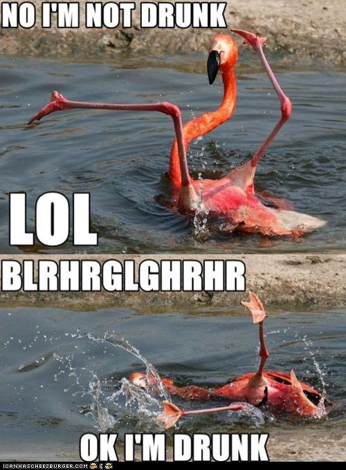 hAHAHHAHA: Laughing, So Funnies, Hilary, Giggl, Humor, Drunk Flamingos, Smile, Funnies Stuff, Animal