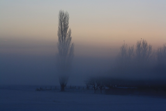 Nature in Delfgauw, Netherlands (misty tree : again fog) - a photo by Pea