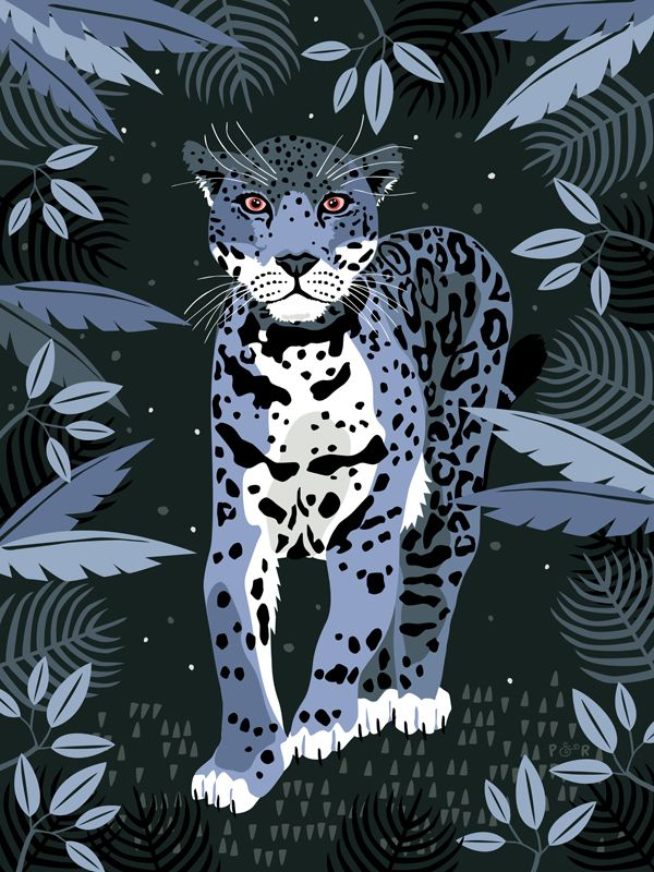 Jungle Collection by Poppy & Red , via Behance