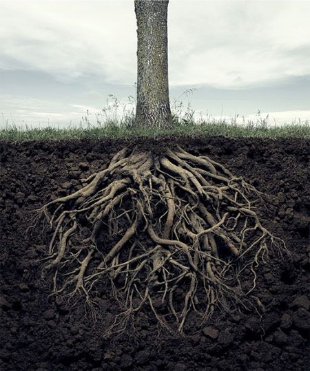 Tree Roots Underground | www.pixshark.com - Images ...
