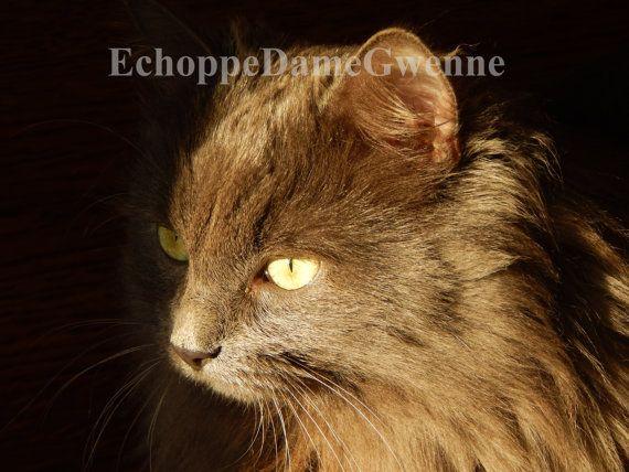Photo l'Ombre d'un chat