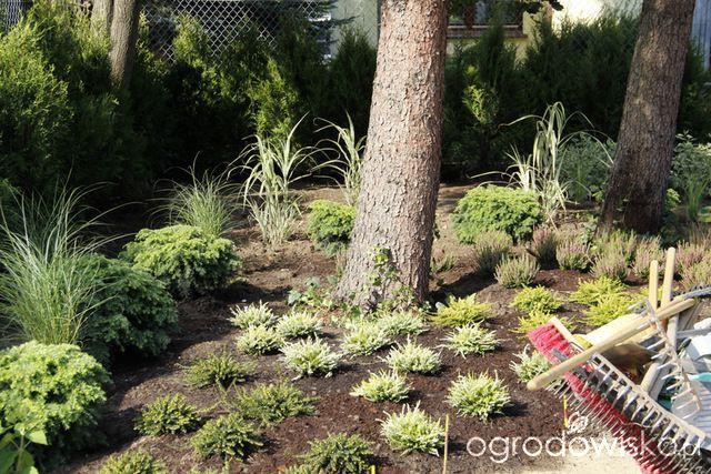 Zimozielony ogród przy białym domu - strona 53 - Forum ogrodnicze - Ogrodowisko
