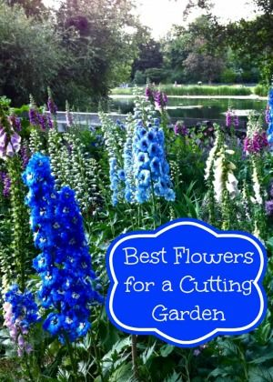 want a cool garden: blues, purples, whites, and soft pinks with a splash of orange or vibrant fuscia.   For this type of garden I would plant Delphiniums, Larkspur and Gladiolis for my tall flowers and Asters, Daisies, Waxflowers for my filler flowers