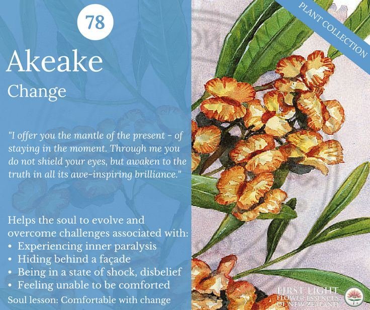 Akeake - Change - the great awakener. Helps to bring clarity to the present moment and facilitate movement into the new. Use for any unexpected event or circumstances, such as a sudden upsetting phone call, 'out of the blue' news or distressing event. Helps in an emergency, crisis, accident, shock, change, sudden upset, calamities or setback in life, job or relationship.