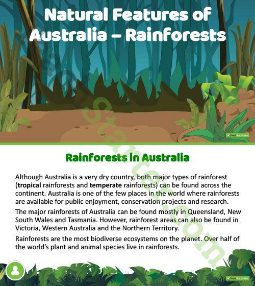 Teaching Resource: A 14 slide editable PowerPoint template to use when introducing Australia's rainforests.