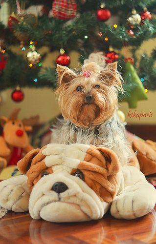 Regalar un perro en Navidad puede ser en principio un regalo increíble, quizás el mejor regalo que se puede hacer a una persona, pero hay que tener muchísimo cuidado en, primero, regalar un perro que se ajuste al perfil del nuevo propietario, y segun Premium Pet Coverage! http://www.petinsurance.1800petsandvets.com