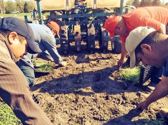 """Latinos are learning to farm Minnesota-style: June 8, 2014: Latinos who dream of becoming farm owners are forming co-ops and getting business training."" Stone's Throw Agricultural Cooperative via Stone's Throw Agricultural Cooperative article pass on"