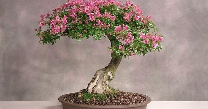 Cómo hacer un bonsái: ¡técnicas básicas para principiantes!