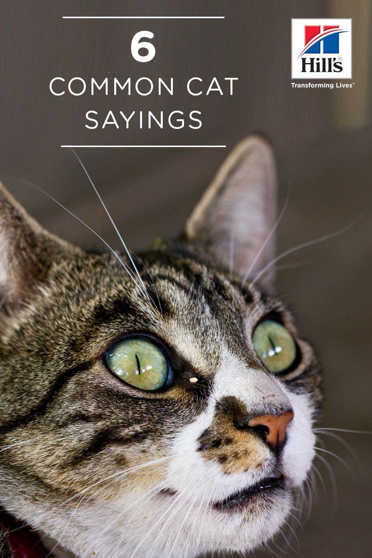 6 Common Cat Sayings Their Origins Hill S Pet Cats Cat Quotes Cat In Heat