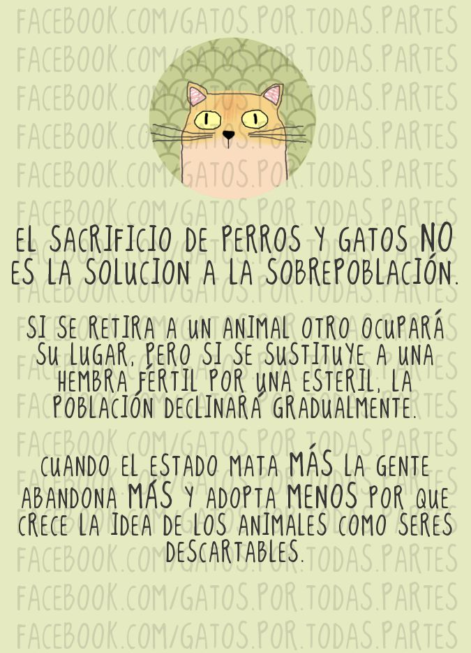 https://www.facebook.com/gatos.por.todas.partes/photos/pb.207350112727036.-2207520000.1415027758./506533846141993/?type=3