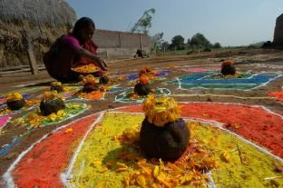 colorful rangoli pongal special photos
