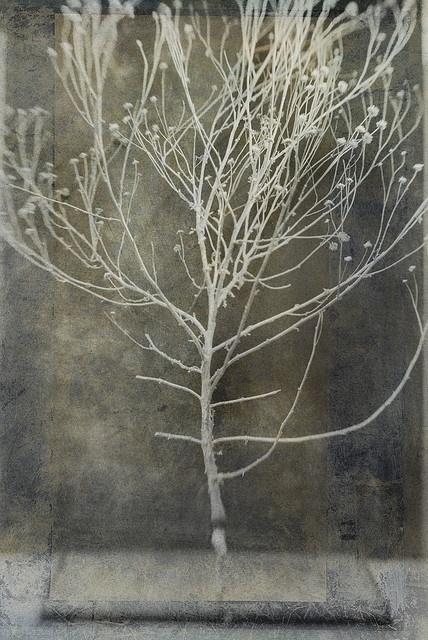Elena Ray. Skeleton of desert plant. Photo based mixed medium image