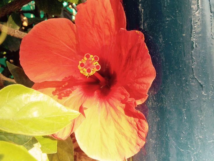 Paraiso rojo la Antilla
