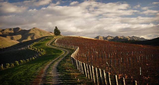 Seresin Raupo Creek Vineyard by Seresin Estate, via Flickr