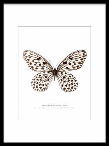 Affisch med fjäril, fin till modern inredning. Svartvit fjärilstavla. Posters och prints med insekter.