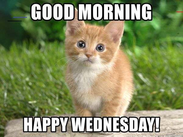 Happy Wednesday Memes To Post To Social Media Happywednesdayquotes Wednesday Is Coming Who Doesn T Like Wednesdays It S A Mittwochsgrusse Grusse Mittwoch